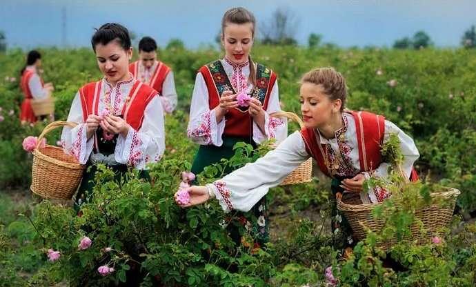 La cosecha de rosas